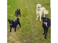 Kings K9's Peterhead 5* rated Dog Walker, Pet Sitter, Pet Taxi and provider of other Pet Services