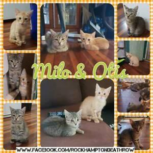 Milo & Otis - Rescue Kittens