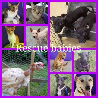 Rescue babies need homes