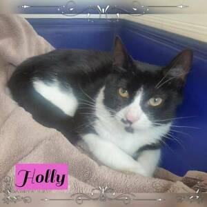 Holly~Rescue Kitten~Vet work included