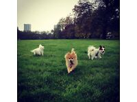 Professional dog walker East London and pet/house sitter London available 24/7