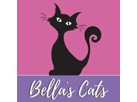 Bella's Cats - Cat Sitting Purrrfection