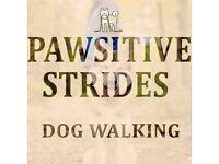 PAWSITIVE STRIDES DOG WALKING (G41 + G42 Postcodes)
