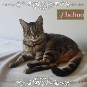 Thelma & Louise~Rescue Cat's~Vet Work Included