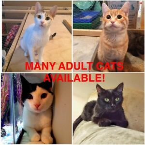 Fur Babies! Spayed/Neutered, Vaccinated, Dewormed! Cambridge Kitchener Area image 10
