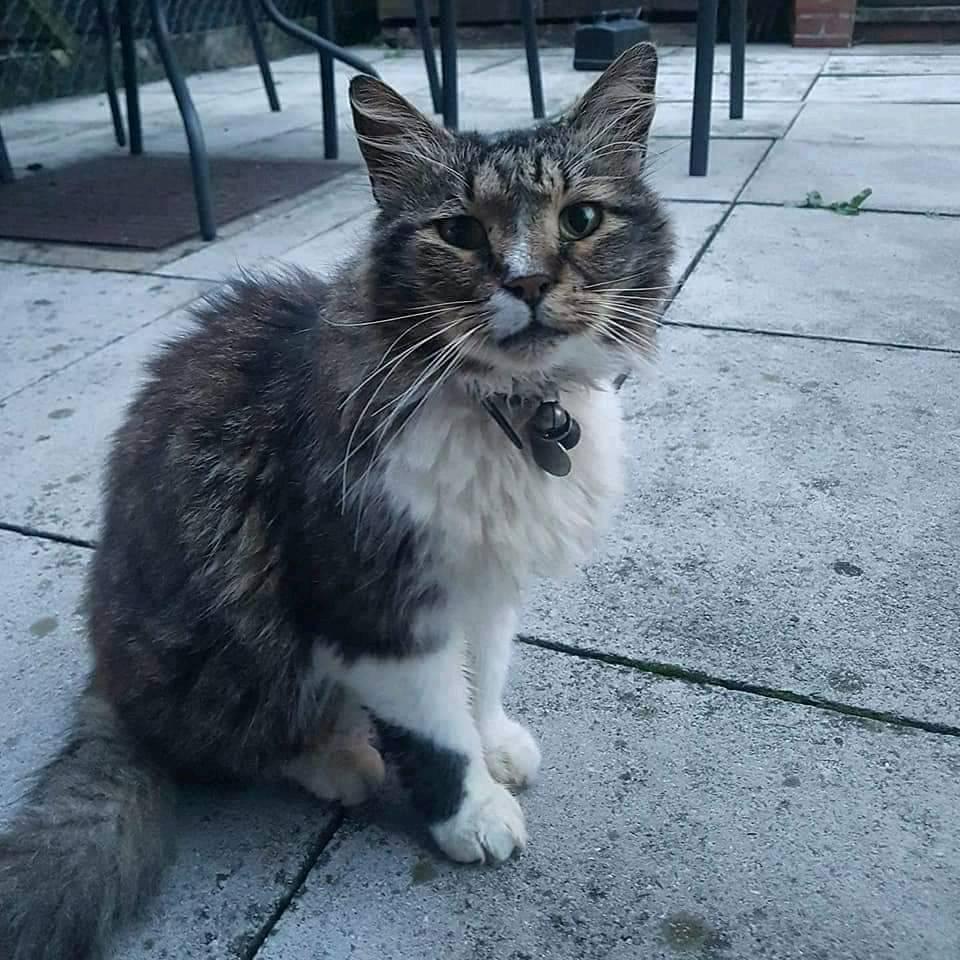 Missing cat