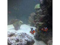 Marine fish tank 240 L