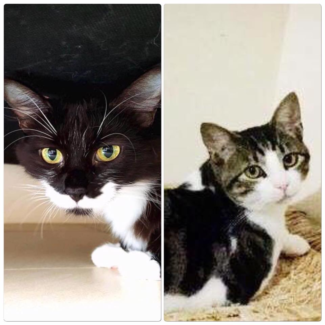 AC0235/AC0478 : Arrow/Maggie - CATS to ADOPT - Vet Work Included