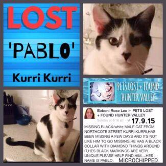 Missing our beloved pablo   Kurri Kurri Cessnock Area Preview