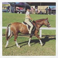 13.2hh, 11yo Welsh B allrounder gelding. Collector Yass Valley Preview
