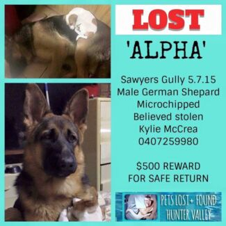 """ALPHA"" Still missing Sawyers Gully Cessnock Area Preview"