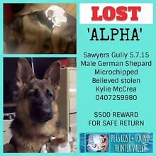 """""""ALPHA"""" Still missing Sawyers Gully Cessnock Area Preview"""