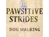 Pawsitive Strides Dog Walking & Pet Sitting Services (Glasgow Southside)