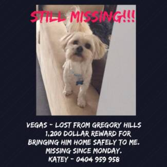 LOST DOG REWARD OFFERED