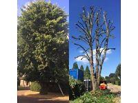 William's Arboriculture