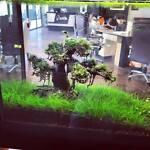 Bonsai Driftwood for AQUARIUM