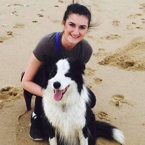Female Long Haired Border Collie Pup wanted Bairnsdale East Gippsland Preview