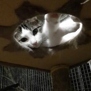 **FOSTER CARE NEEDED** - BLINKY & TRINITY (IF030-18 & IF002-18) Baldivis Rockingham Area Preview