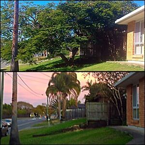 Garden, Tree lopping, lawn mowing, hedging, Oxley Brisbane South West Preview
