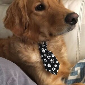 Dog wash kijiji in alberta buy sell save with canadas 1 dog ties and bowties solutioingenieria Image collections