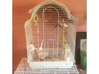 Budgie in white cage, Green male £40