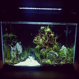 Aquarium items