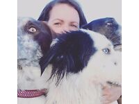 WANTED ASAP: Dog friendly accommodation