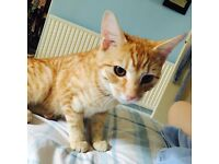 MISSING ginger kitten. WS9. Believed to of been taken in by someone in the rain.