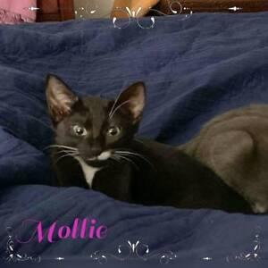 Mollie~Rescue Kitten~Vet Work Included