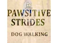 Pawsitive Strides Dog Walking and Pet Sitting Services ( Glasgow Southside)