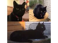 Missing since 20.04.18 Bella - small adult black cat - microchipped and spayed