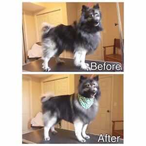 Certified Dog Groomer NW/SW