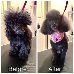 Professional Certified Dog Groomer SW/NW
