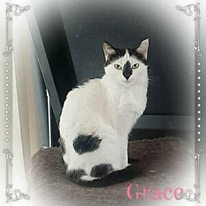 Grace~Rescue Cat~Vet Work Included
