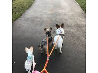 Fully insured pet sitter & dog walker - Walsall, Cannock & surrounding areas, willing to travel.