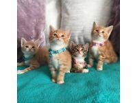 *Stunning Bundle of Ginger Cuddles* 2 Boys & 2 Girls