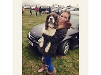 FRIENDLY DOG WALKER - CLAPHAM - FLEXIBLE HOURS