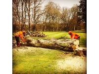 hardworking nptc qualified chainsaw operator /landscaper seeking work for the season