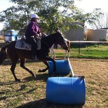 Pretty mare with a big heart Ipswich City Preview