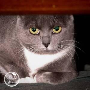 AC0857 : Kat - CAT for ADOPTION - Vet Work Included