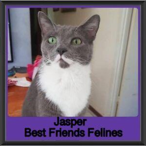 Jasper - Best Friends Felines