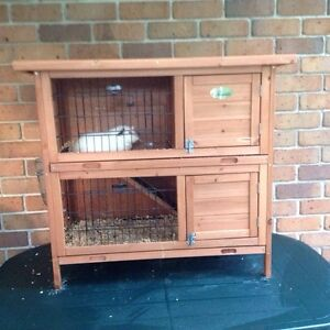 Guinea Pig Cage and 2 Guinea Pigs Clear Island Waters Gold Coast City Preview