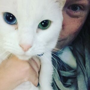 Free white domestic cat Clyde Casey Area Preview
