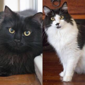 AC0220/AK0787 : Justine/Lilla - CATS to ADOPT - Vet Work Included