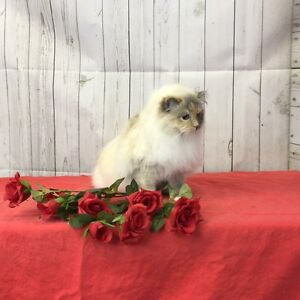 The Spoiled Pet Club ~ BRAND NEW FACILITY! Cat Grooming
