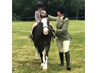 Shadow is looking for equestrian enthusiasts in Arborfield - Berkshire