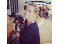 Kirsty's Affordable Dog Walking, Pet Sitting and Pet Care Services