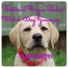 TR33NIS WAGN TAILS MOBILE DOG GROOMING Narellan Vale Camden Area Preview