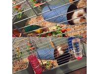 2 guineapigs, 2 Tier Cage & Accessories
