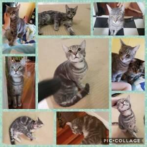 Sam - Rescue Cat